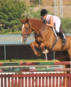 Me show jumping gelding by Baloubet de Rouet