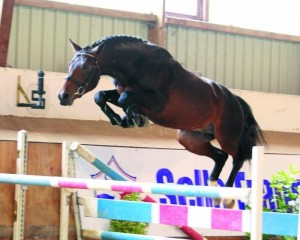 stallion 2007