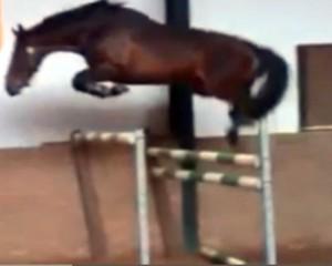 2010 stallion Indoctro