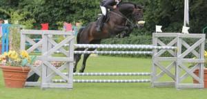 stallion AB2